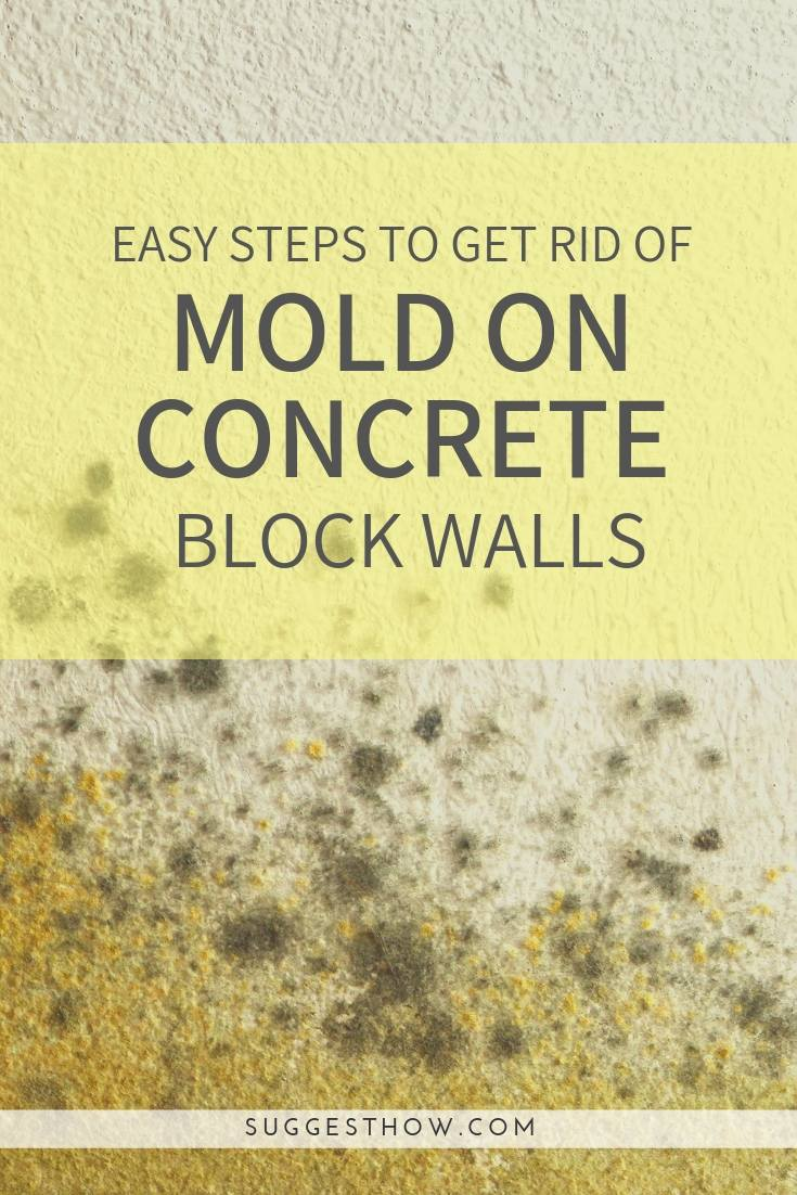 Get Rid of Mold on Concrete Block Walls