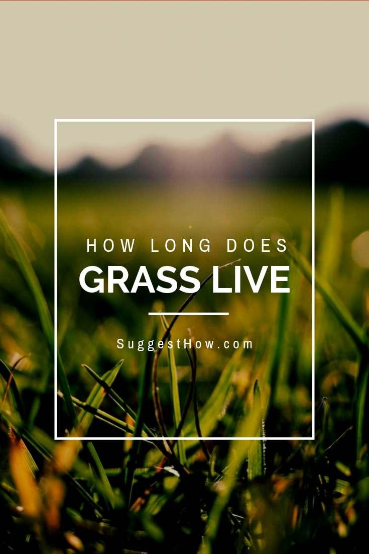 Grass Lifespan