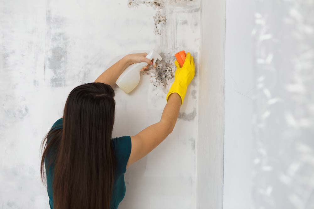 How to Get Rid of Mold on Concrete Block Walls