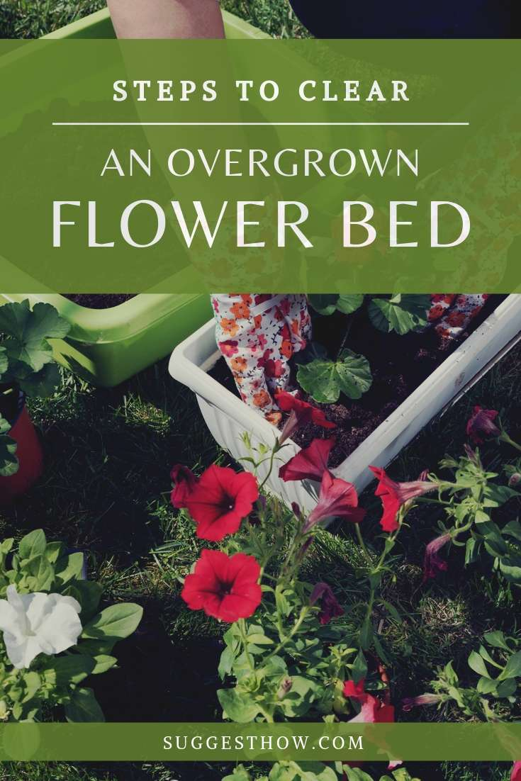 how to clear an overgrown flower bed