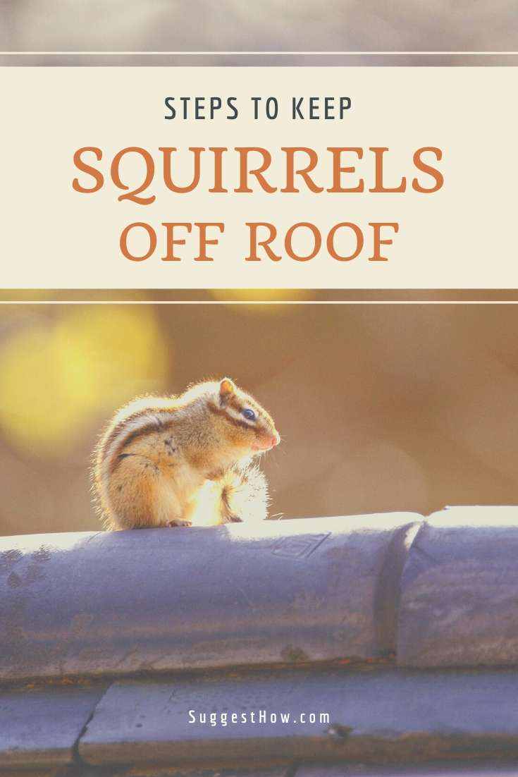 how to keep squirrels off roof