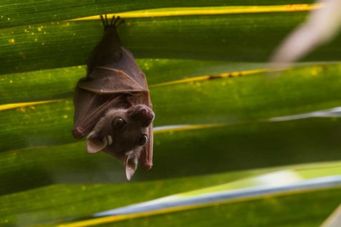 how to keep bats from roosting under eaves