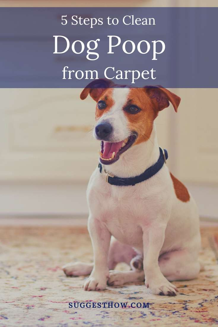 how to clean dog poop from carpet