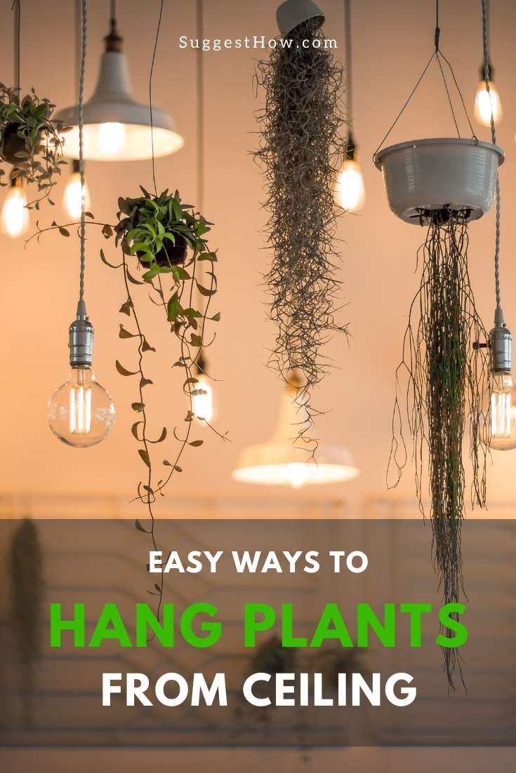 how to hang plants from ceiling