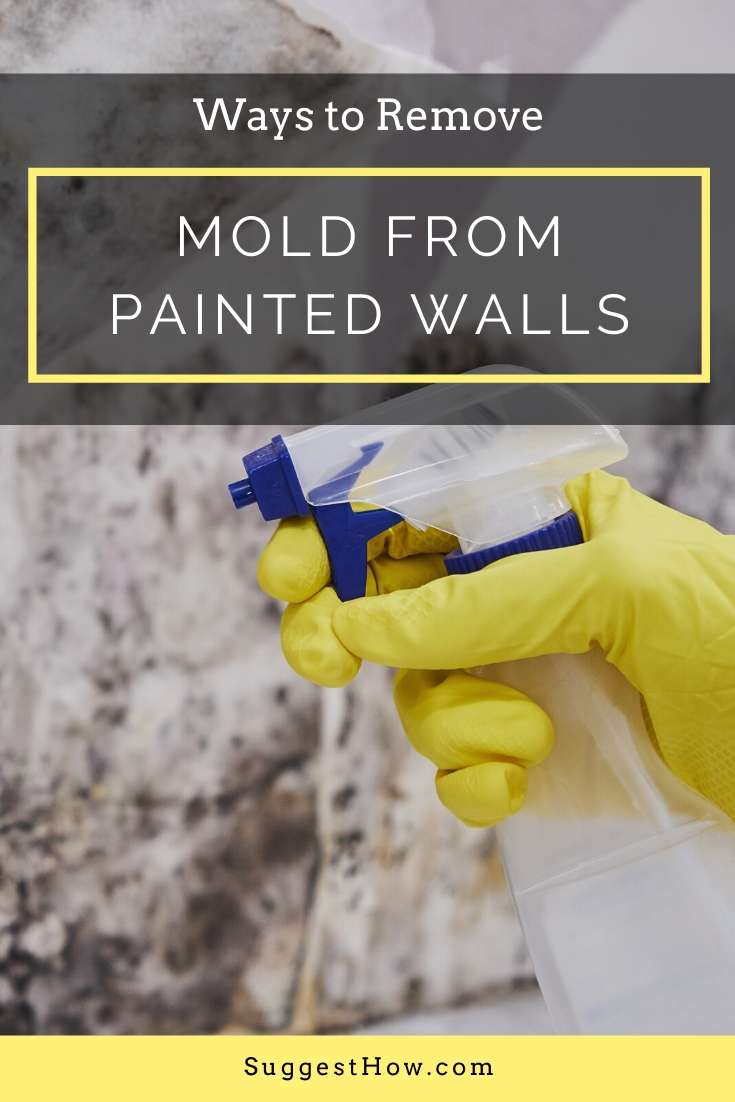 how to remove mold from painted walls