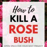 how to kill a rose bush