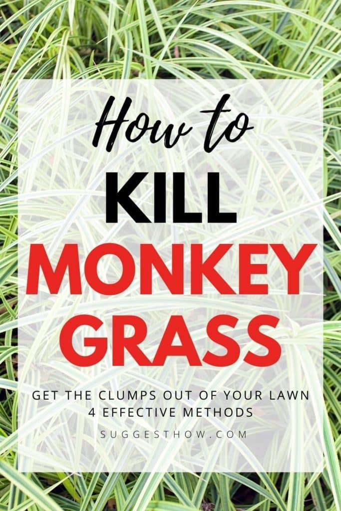 how to kill monkey grass